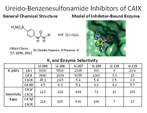 Ureido-Benzenesulfonamide Inhibitors of CAIX