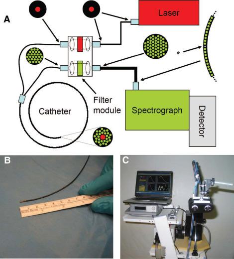 Raman Spectroscopy and Multimodality Endoscopy Imaging 2